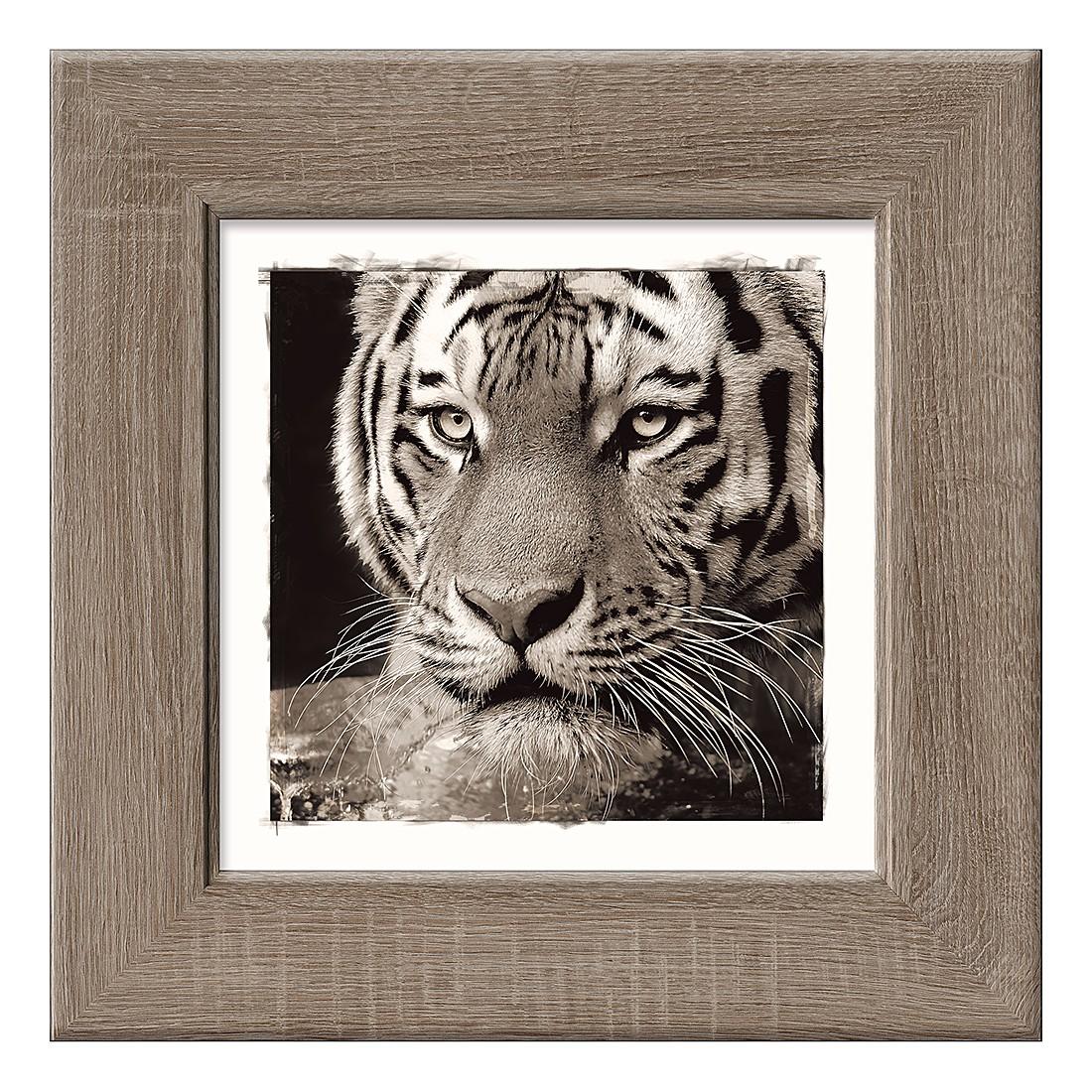 Kunstdruck Tiger I